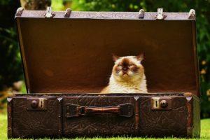 トランクケースと猫