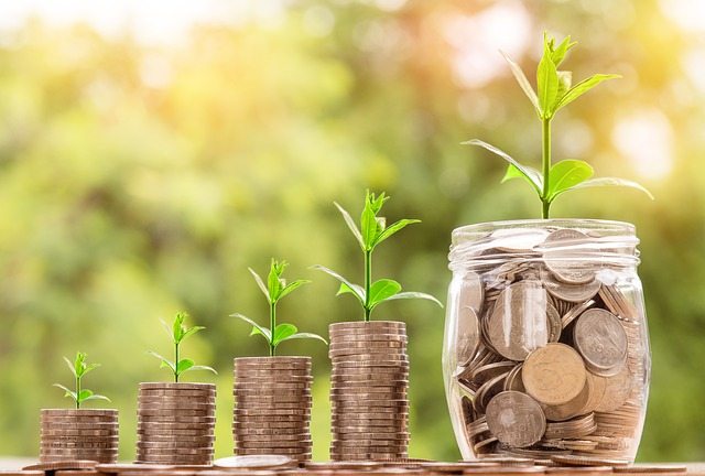 お金と緑の芽